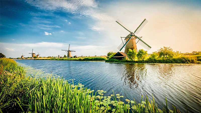 Elefante azul em Netherlands8